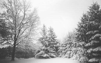 Wir wünschen besinnliche Tage im Januar und ein tolles 2016!