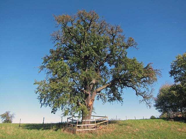 Natur bei Albstadt